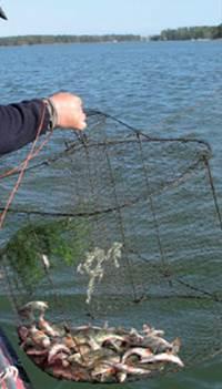мереж рыболовные снасти