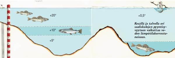 разрешенные размеры ловли рыбы в астраханской области